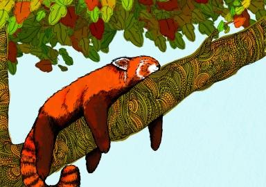 jojo norris red panda